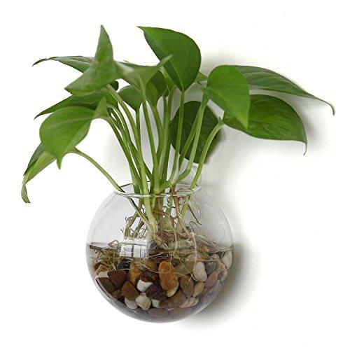 T4u vetro appeso vaso di fiori piantatrice di bolle per la decorazione della parete, diametro 12cm