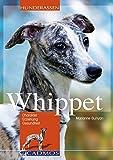 Whippet: Charakter, Erziehung und Gesundheit (Cadmos Hunderassen)