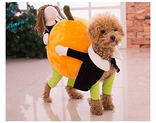 Haustier Verklärung Kostüm Hund Katze tragen Kürbis Kleidung mit Lächeln Gesicht (S-25cm (Back Length))