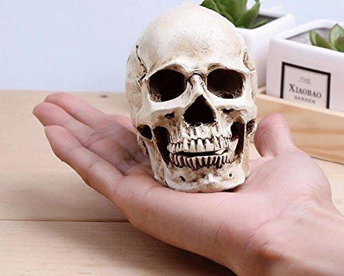 Kleine Größe Replica Realistische Menschlicher Schädel Gothic Party Dekoration Ornament