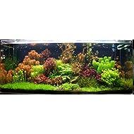50 Live Aquarium Plants Tropical Aquatic Plants for your fish tank