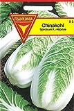 Chinakohl Spectrum F1 Hybride, Salatgemüse, Herbstsalat