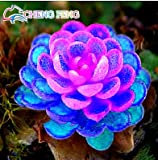 100pcs Rare Mix Farbe Lithops Samen Sukkulenten Rohstein Kakteensamen für Wohnzimmer / Büro Eingemachte Blumen Fleshy freies Schiff