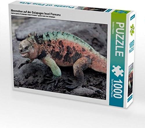 CALVENDO Puzzle Meerechse Auf der Galapagos Insel Floreana 1000 Teile Lege-Grösse 64 x 48 cm Foto-Puzzle Bild Von Reuke Sabine   Nouvelle Arrivée