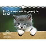 Katzenkinderzauber DIN A4 Kalender 2020 Katzenkinder Katzenbabys - Seelenzauber