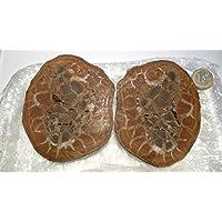 Septarie, Septaria, PAAR, aus Marokko, ca. 602,70g, richtig gross, mit wunderschönen Strukturen und Farben.Neu... preisvergleich bei billige-tabletten.eu