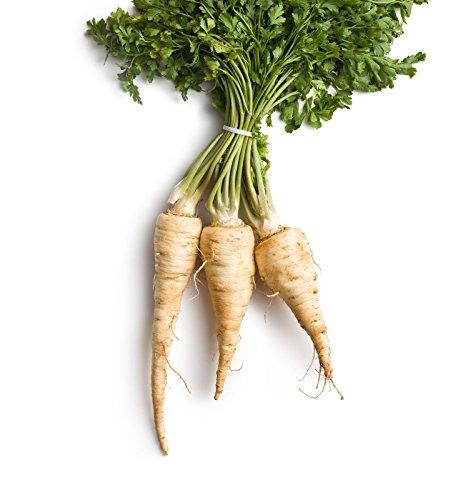 1000 panais Harris Modèle Graines de jardin légumes non Ogm
