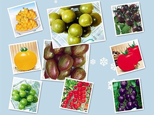 Promotion 200pcs / bag Tomatensamen Kirsche Pfirsich Birnentomate Samen, Lila, Schwarz, Gelb Grün Nicht-GM Bio-Lebensmittel Bonsai Pflanzen