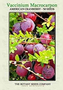 Vaccinium Macrocarpon (50) Graines - Canneberge à Gros Fruits Semences [Large American Cranberry]