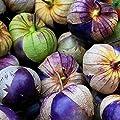 ***Neu Purple Tomatillo*** -Physalis ixocarpa- würzig für Salsa Mexicana 10 Samen von Samenchilishop auf Du und dein Garten