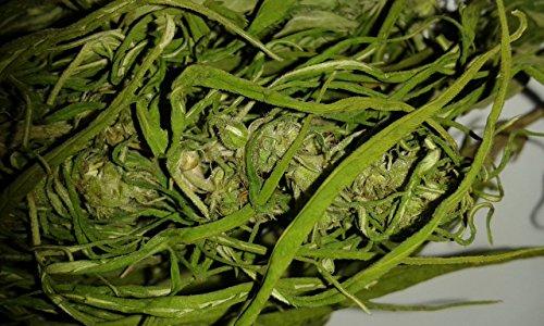 Hanf Dolden (Blüten) getrocknet (50g)