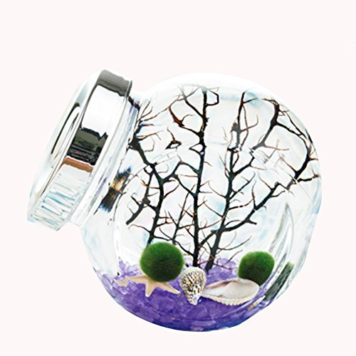 omem für Kinder Algen Moos Bälle Samen Glas Aquarium-Terrarium-Set