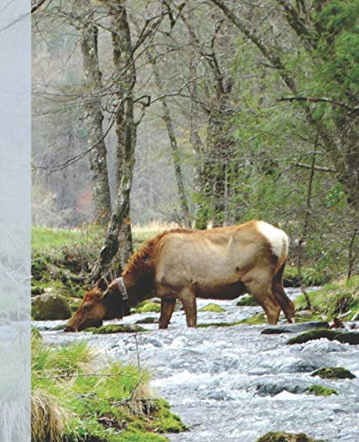 Pretty Female Elk Drinking in a Smoky Mountain Park Stream  Wide-ruled School Composition Lined Notebook (COOL Animals COVERS:  School Supplies & Stuff, Band 1)