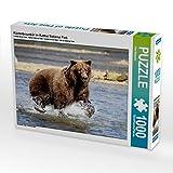 Küstenbraunbär im Katmai National Park 1000 Teile Puzzle quer: Alaska - faszinierend anders (CALVENDO Orte)
