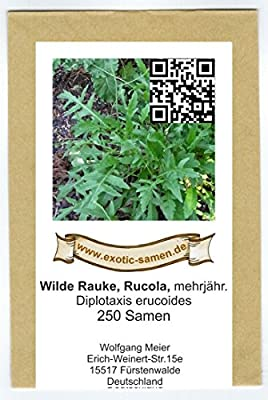 Rucola - Wilde Rauke - mehrjährig - Diplotaxis erucoides - 250 Samen