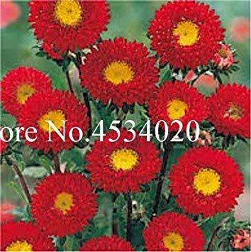 potseed . 100 pezzi aster aster fiore colorato crisantemi perenni fiori giardino della casa della decorazione: 21