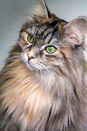 Green Eyed Furry Cat: 150 page lined 6 x 9 notebook/diary/journal (Eyed Green Katze)
