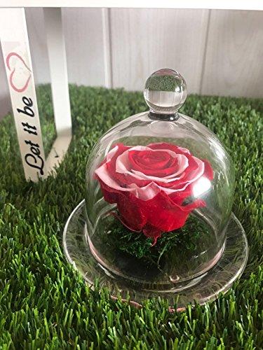 rose-preserve-avec-urne-en-verre-et-coffret-cadeaurouge-blanche