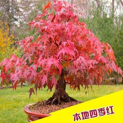 Pinkdose Süße Pfirsich Seedss China Nektarine Pfirsich Außen Baum Bonsai Dwarf Bonanza Pfirsiche Süße Frucht Für Hausgarten-Anlagen 2 Pc