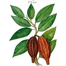 """Impresión artística / Póster: Charles Plumier """"Le Cacao"""" - Impresión de alta calidad, foto, póster artístico, 60x85 cm"""