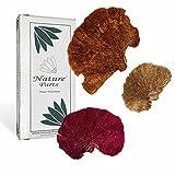 Nature Parts Baumschwamm Lose im 3fach Farbmix (1kg)
