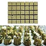 Cubos de Lana de Roca de Cultivo para Esquejes, Clonación, Propagación de Plantas Cultivo de Semillas, Medios de Cultivo Hidropónicos para el Crecimiento Vigoroso de Plantas, 1 Hoja de 49 Tapones