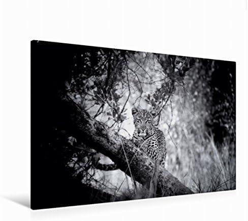 Premium Textile Toile de Paysage Léopard 45 cm cm cm x 30 cm, 120 x 80 cm | Qualité Fiable  ae451d
