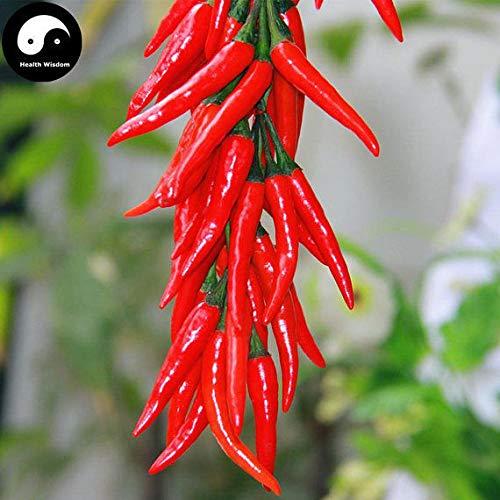 PLAT FIRM KEIM SEEDS: 100pcs: Kaufen Hot Chili Samen Pflanze Super-Chili-Pfeffer Gemüse