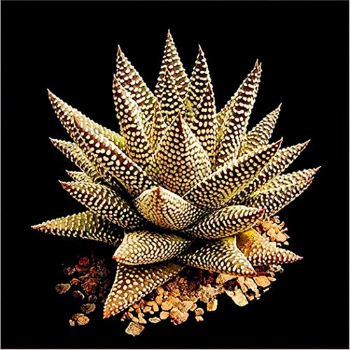 Ncient 50 semi sementi di aloe vera perenne pianta succulenta semi fiori rari profumati piante per orto giardino balcone interni ed esterni