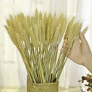 TooGet Ramo de Hojas de Trigo Secas para Ramo de Flores, 80 Unidades de Acrobacias Naturales para la Oreja de Trigo…