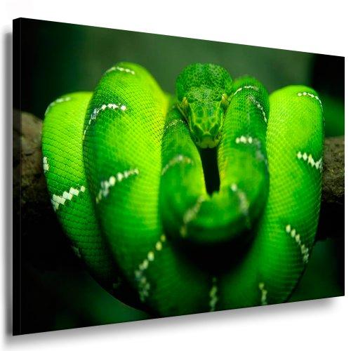 Bilder Kunstdrucke / Boikal / Bild mit Keilrahmen Grüne Schlange 100x70 cm xxl.329 - Schlange Leinwand