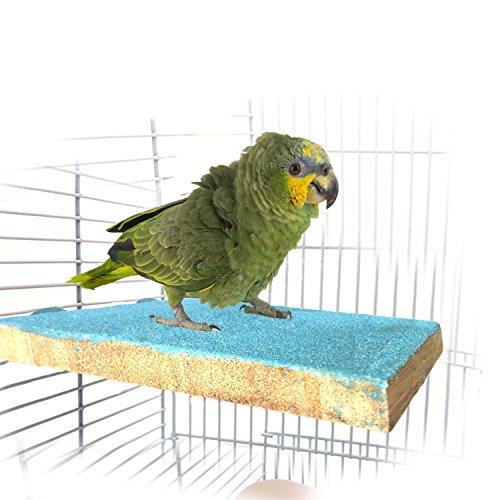 Bwogue Pájaro colorido perca soporte plataforma
