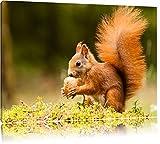 Eichhörnchen mit Nuss Format: 100x70 auf Leinwand, XXL riesige Bilder fertig gerahmt mit Keilrahmen, Kunstdruck auf Wandbild mit Rahmen, günstiger als Gemälde oder Ölbild, kein Poster oder Plakat