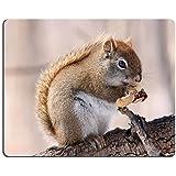 Luxlady ratón para Gaming imagen ID: 26966314ardilla roja Americana en Bare rama en el invierno comiendo un cacahuete