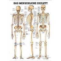anat. Póster explicativo sobre la: esqueleto humano 70 x 100 cm, laminado