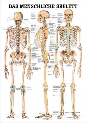 Ruediger anatomie the best Amazon price in SaveMoney.es