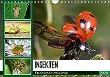Insekten. Faszinierend und wichtig (Wandkalender 2020 DIN A4 quer): Skurrile Wunderwerke der Natur aus der Nähe betrachten (Monatskalender, 14 Seiten ) (CALVENDO Tiere) -