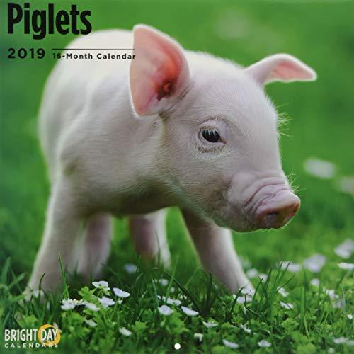 Piglets 2019 (ANIMALS)