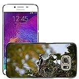 hello-mobile Bild Hart Handy Schwarz Schutz Case Cover Schale Etui // M00137320 Buntspecht Vogel // Samsung Galaxy S6 (Not Fits S6 EDGE)