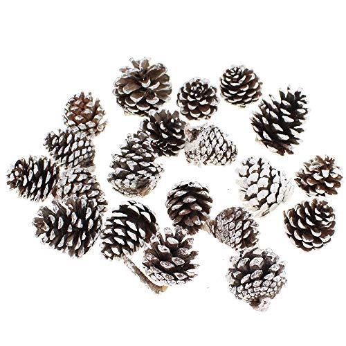 Floral-Direkt 20 Pinienzapfen weiße Spitze 4-10cm Schneezapfen Kiefernzapfen Pinie Zapfen