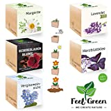 Feel Green Ecocube Set di Fiori con 5 varietà - 25% Risparmio nel Pacchetto, Piante nel Dado in Legno, Idea Regalo sostenibile, Grow Your Own/Set di Coltivazione, Made in Austria