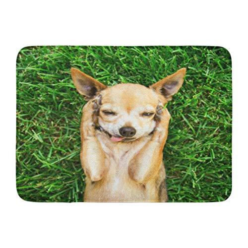 Fußmatten Bad Teppiche Outdoor / Indoor Fußmatte Authentisch und einzigartig von niedlichen Chihuahua Seine Pfoten auf Kopfbedeckung Ohren Frisches grünes Gras Badezimmer Dekor Teppich Badematte - Gras-teppich Badezimmer