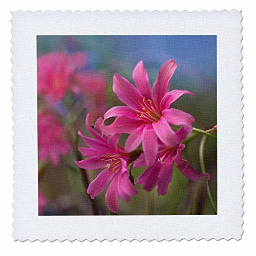 3dRose qs_259147_1 Rocky Mountain Columbines, Colorado, USA Steppdecke, quadratisch, 10 x 10 cm Rocky Mountain Quilt