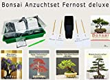 Seedeo® Bonsai Growing Set Extrême-Orient de luxe