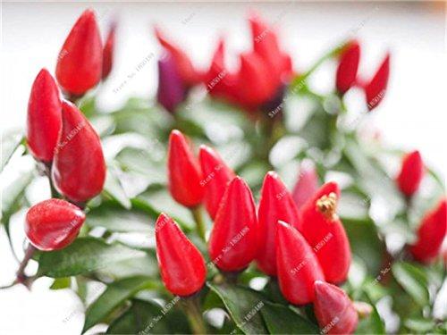 Cerise poivre Graines de légumes jardin Bonsai Chili plantes non-Ogm Jardin Décoration Cuisine Assaisonnement Alimentation 200 Pcs 13
