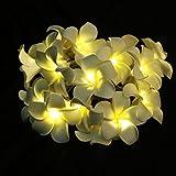 ledmomo Blume Lichterkette Batterie betrieben Lichterkette 20LED Frangipani Plumeria Blume Dekoration (warmweiß)