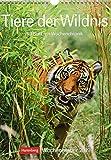 Tiere der Wildnis - Kalender 2019: Wochenplaner, 53 Blatt mit Wochenchronik