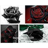 2016 100 semillas de rosa raras Negro flor de la rosa roja con borde Raras flores de Rose Seeds.For Jardín Bonsai mezcla de siembra Colores