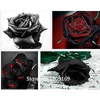 2016 100 semi di rosa rari Black Rose fiore con Red Bordo raro della Rosa Fiori Seeds.For giardino bonsai Piantare Mix Colors