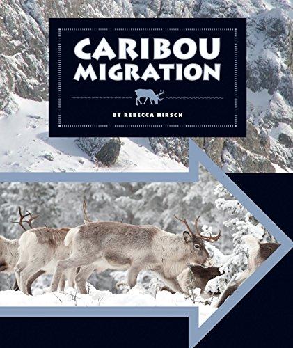 Caribou Migration (Animal Migrations)
